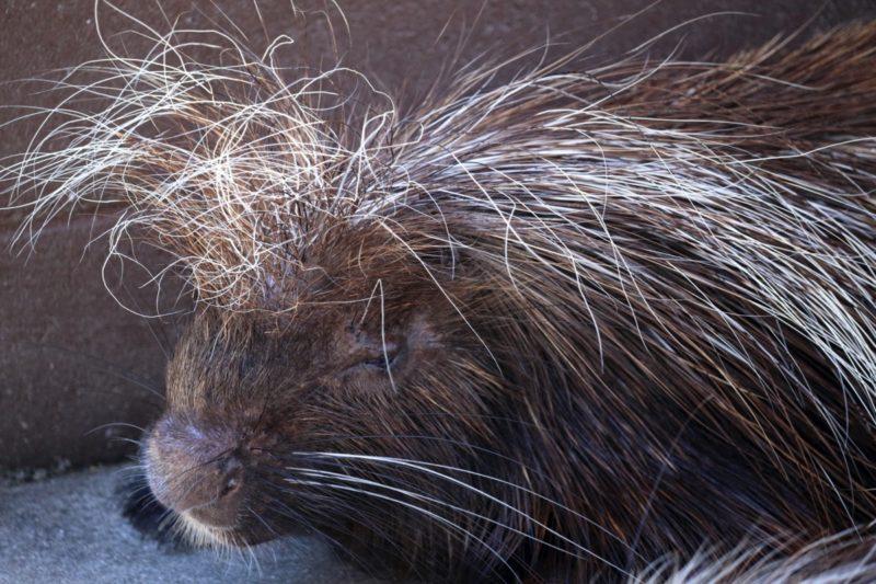 【アホ毛対策】髪の毛のクセが原因の場合